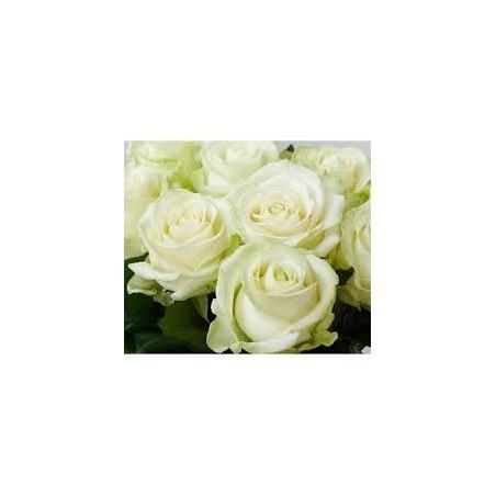 Rose blanche à l'unité