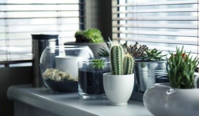Comment bien entretenir son cactus ?